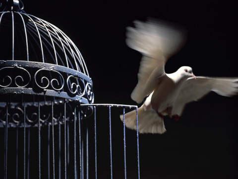 Somos Libres